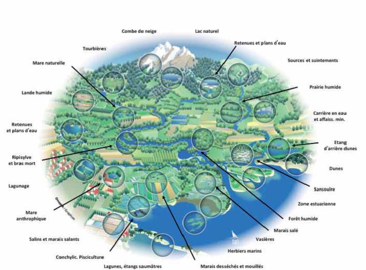 Le marais du fouzon zones humides - Office national de l eau et des milieux aquatiques ...
